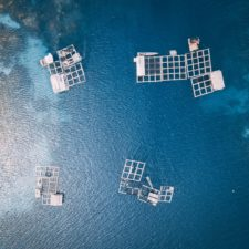 Sea Cucumber Farming Could it be Commercially Scalable